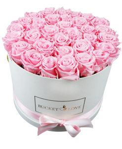 ogromno vrtnic v eksotični embalaži
