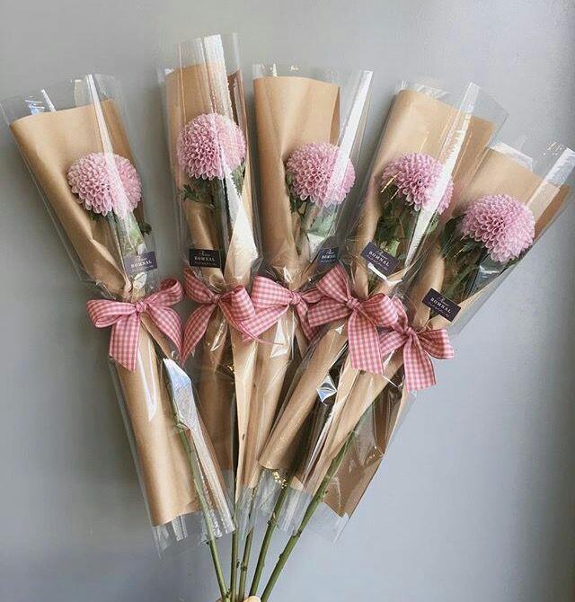Roza nagelj