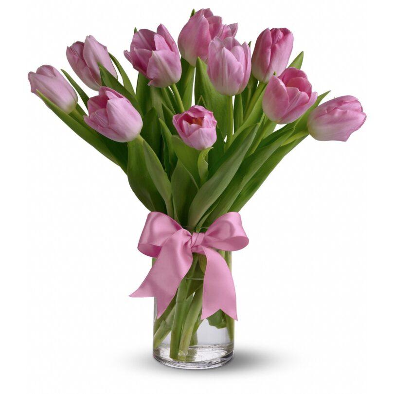 Roza tulipani