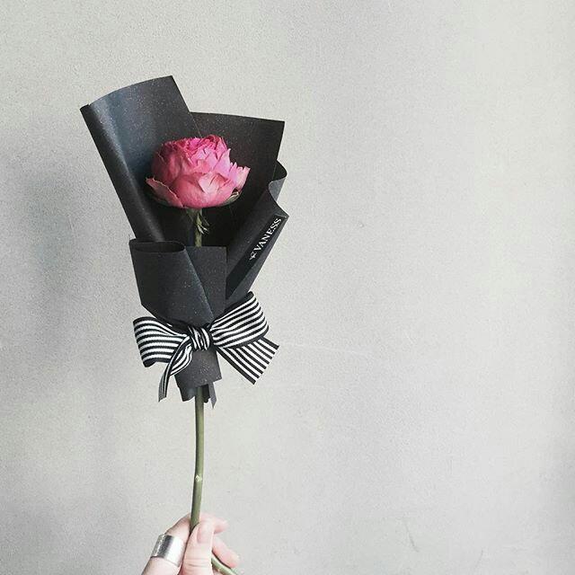 Roza vrtnica